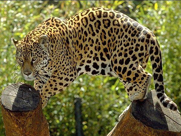 site-pantanal-10