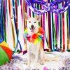 Pets fazem ensaio fotográfico de Carnaval